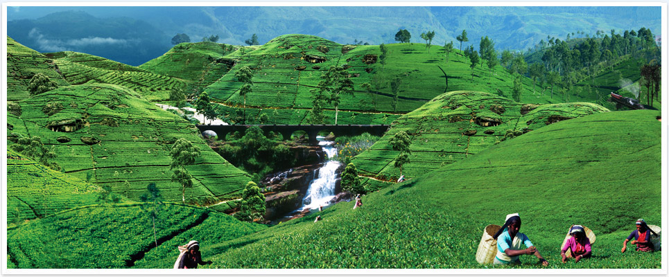 invite-to-paradise-sri-lanka-holidays-honeymoons-heritance-tea-plantation-hotel-tea-factory-tea-plucking-1.jpg