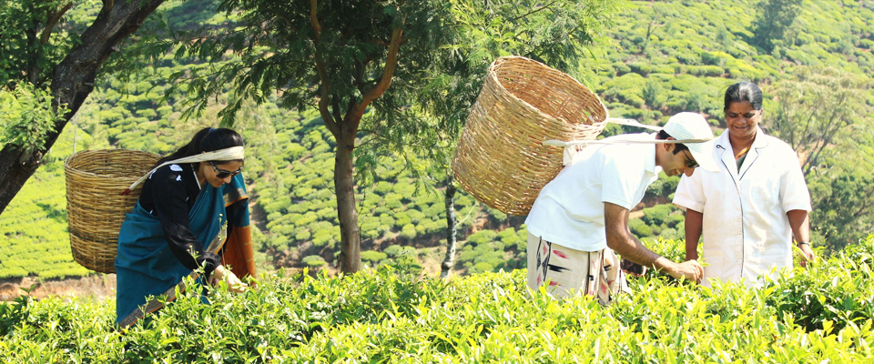 invite-to-paradise-sri-lanka-holidays-honeymoons-heritance-tea-plantation-hotel-tea-factory-tea-plucking.jpg