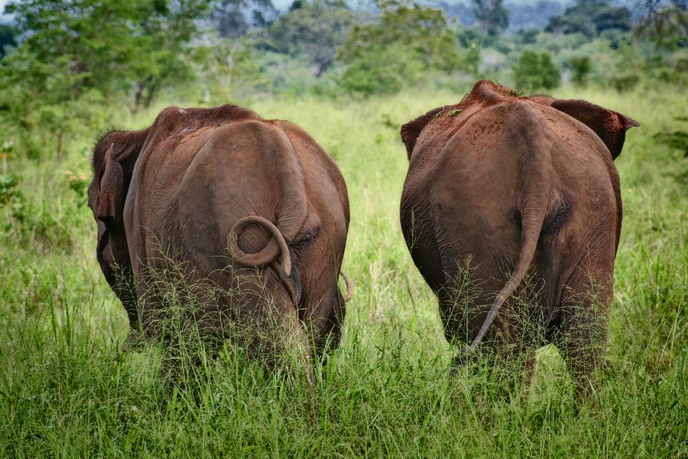 invite-to-paradise-sri-lanka-honeymoon-holiday-elephant-safari-wild-adults.jpg