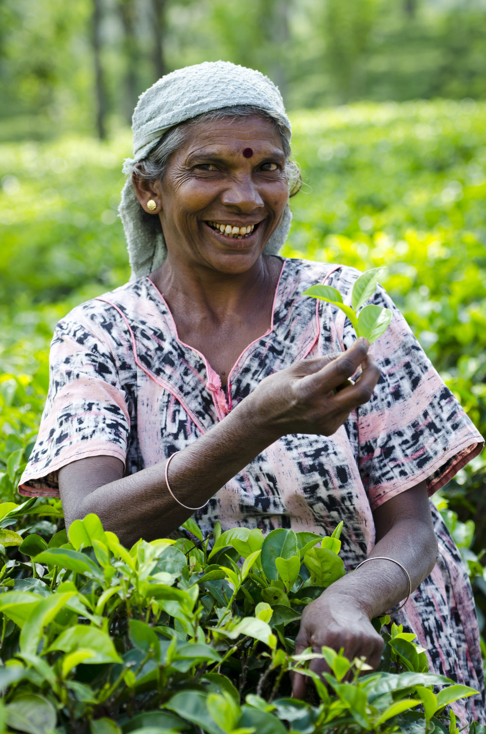 invite-to-paradise-sri-lanka-holiday-honeymoon-tea-plantations-mountains-tea-picker-3.jpg