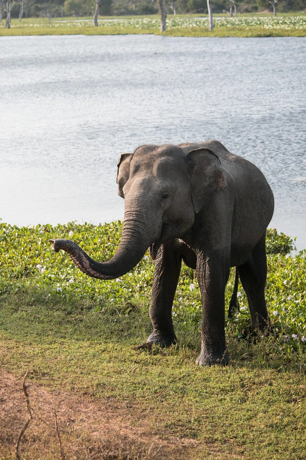 invite-to-paradise-sri-lanka-and-maldives-specialists-travel-agent-tour-operator-customer-review--feedback-joel-rhian-elephant-8.jpg