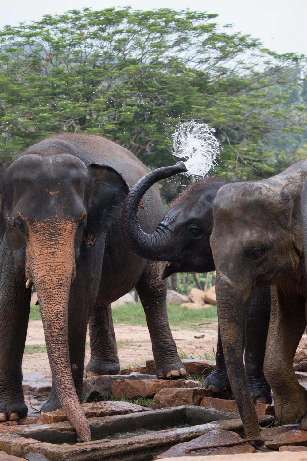 invite-to-paradise-sri-lanka-and-maldives-specialists-travel-agent-tour-operator-customer-review--feedback-joel-rhian-elephants-10.jpg