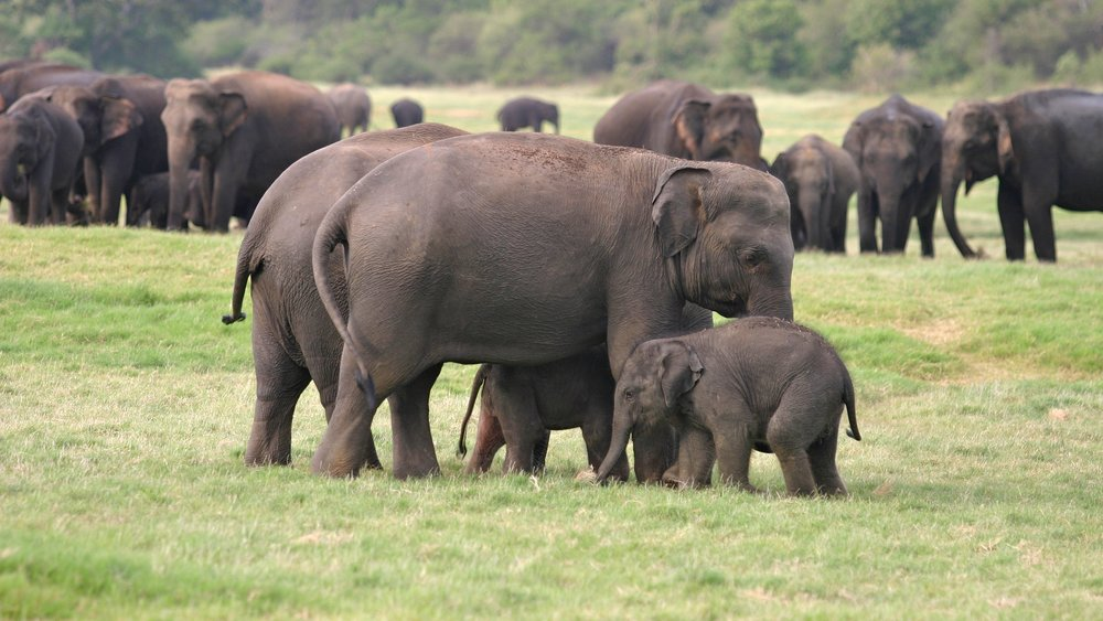 Enjoy wild elephants together as a family.