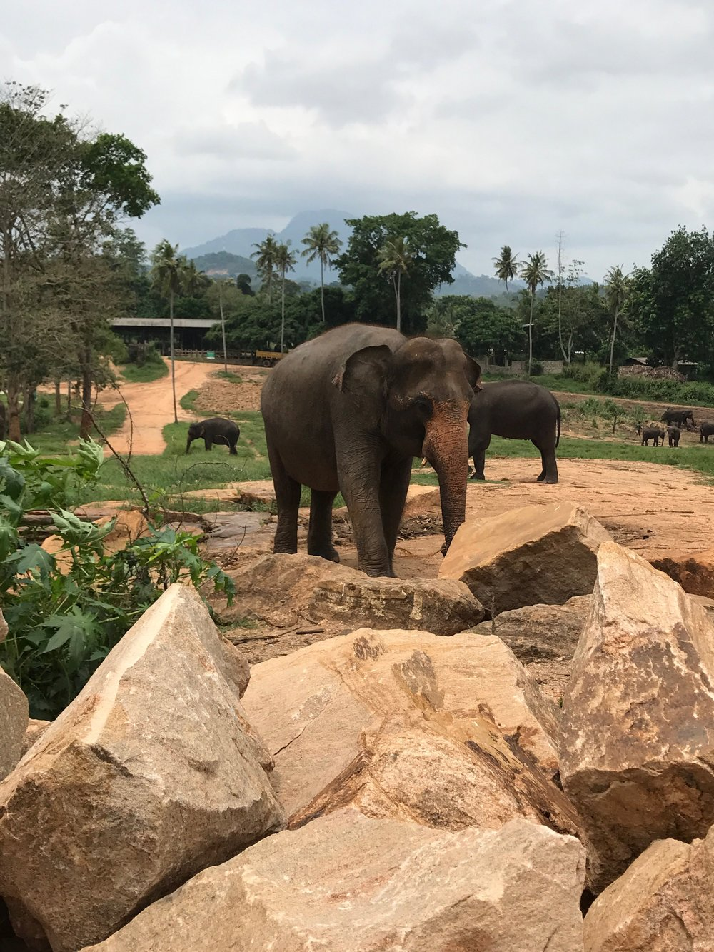 invite-to-paradise-maldives-sri-lanka-specialists-experts-travel-agent-tour-operator-customer-feedback-lucas-emily-fenning-elephant-orphanage-3.jpg