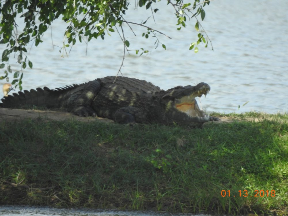 invite-to-paradise-sri-lanka-maldives-holiday-specialists-nutan-vidyut-patel-crocodile.jpg