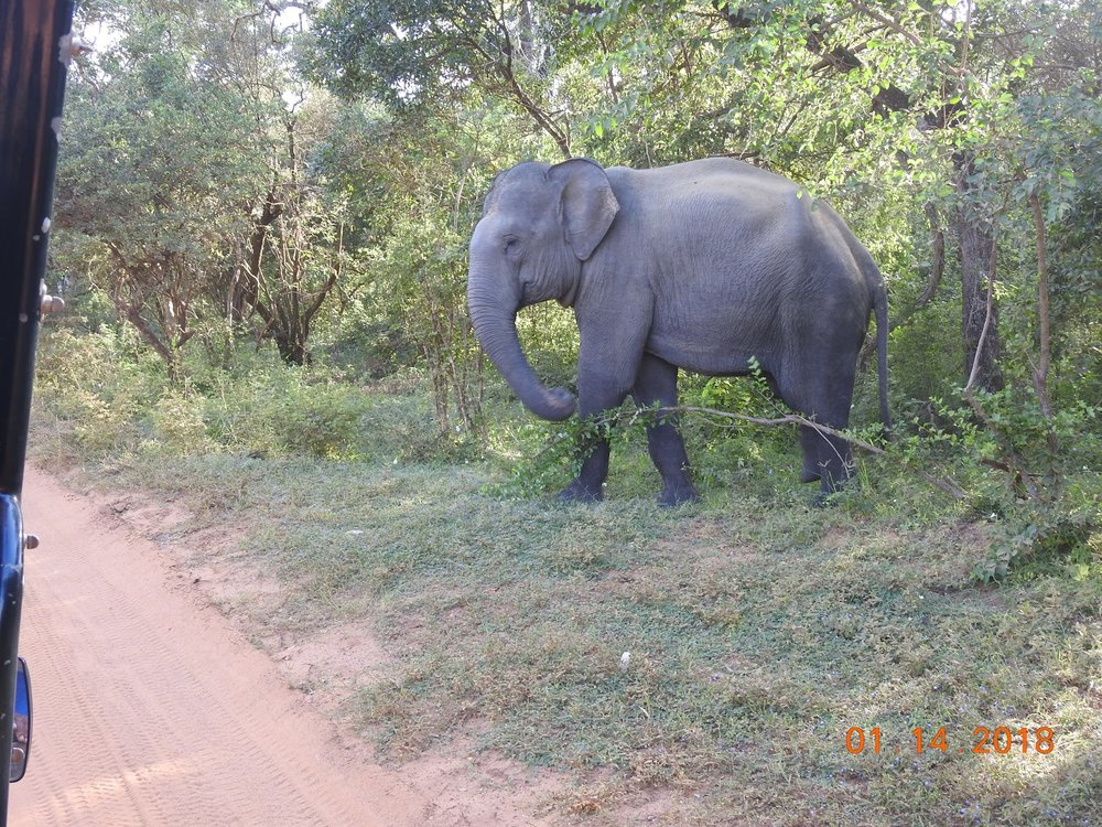 invite-to-paradise-sri-lanka-maldives-holiday-specialists-nutan-vidyut-patel-elephant-safari.jpg
