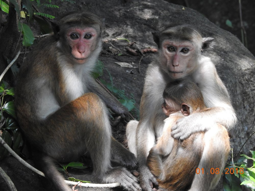 invite-to-paradise-sri-lanka-maldives-holiday-specialists-nutan-vidyut-patel-monkeys.jpg