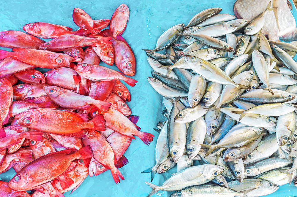 shutterstock_563086957.jpg - Two heaps of fish - red snapper and mackerel at the stall of Galle fish market, Sri Lanka.jpg