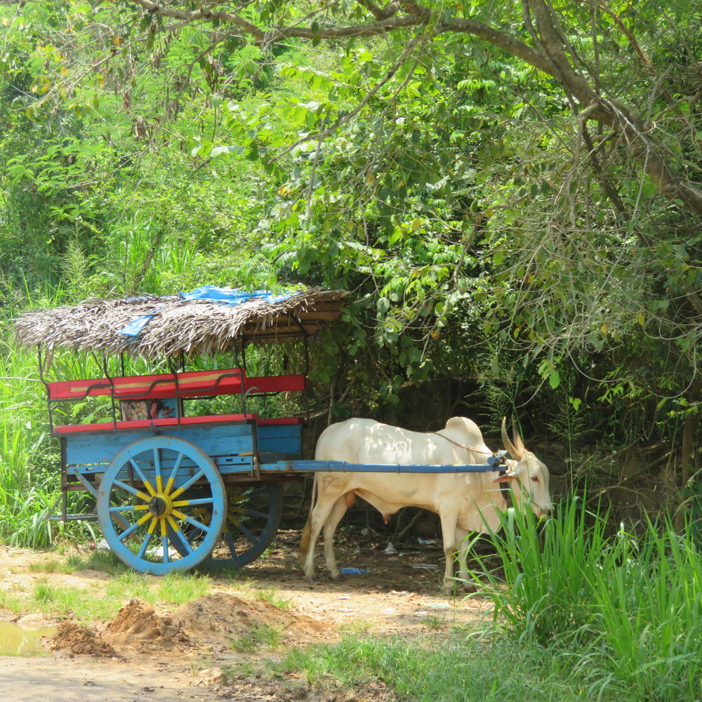 invite-to-paradise-sri-lanka-specialists-thomas-family-holiday-tour-bullock-cart-village-experience.JPG