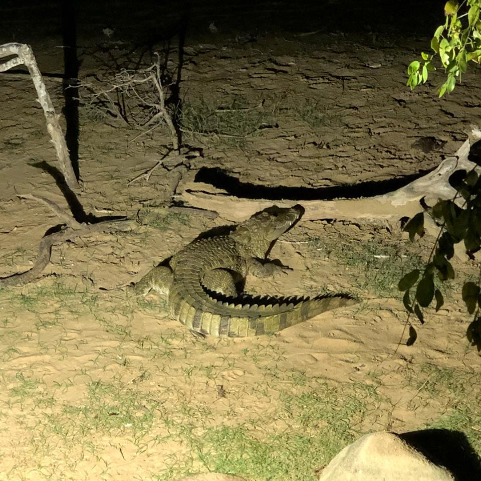 invite-to-paradise-sri-lanka-maldives-holiday-honeymoon-specialists-customer-feedback-matthew-hannah-fordham-yala-crocodile.jpg