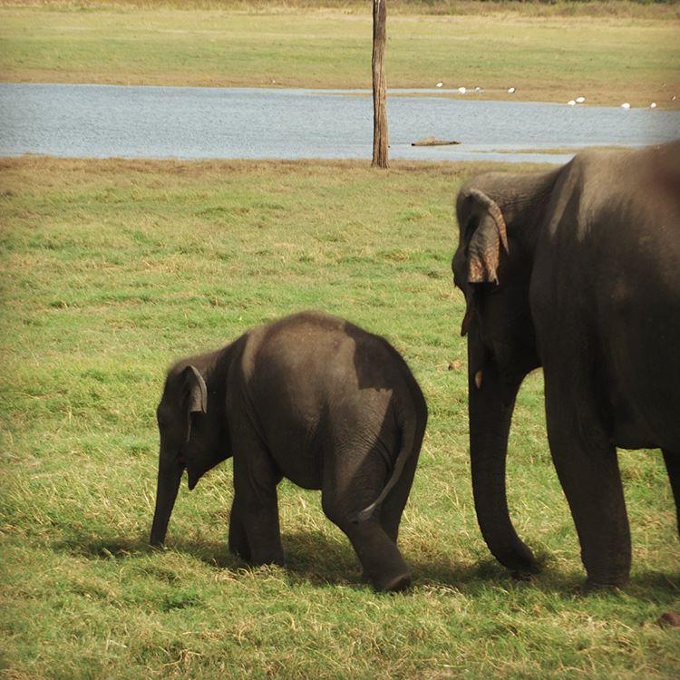 invite-to-paradise-sri-lanka-maldives-holiday-honeymoon-specialists-customer-feedback-edward-bethan-elephant-wildlife-jeep-safari-3.PNG