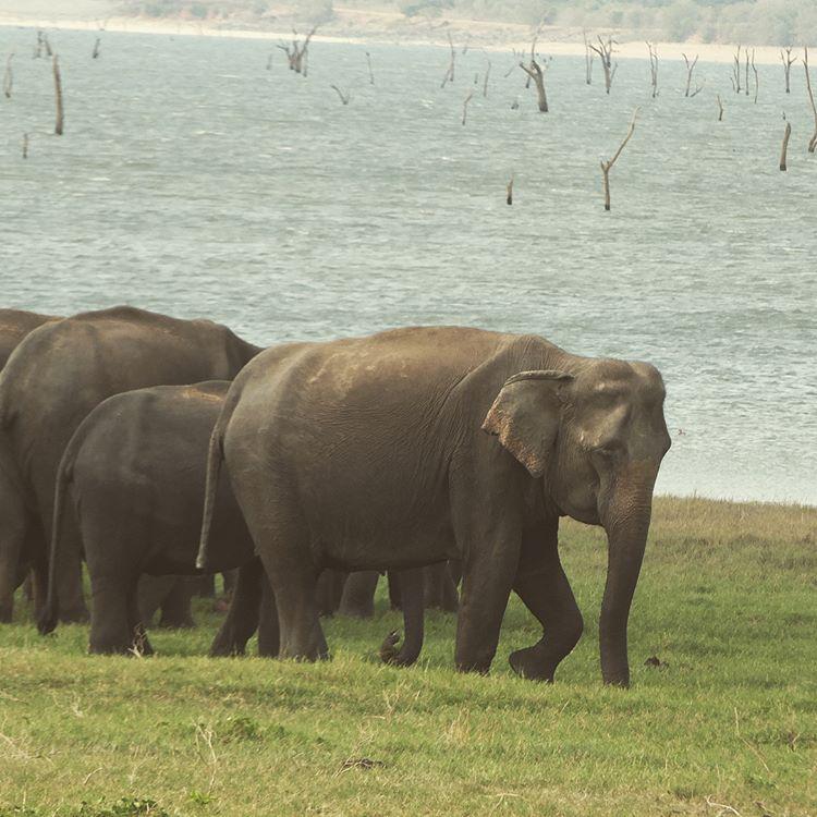 invite-to-paradise-sri-lanka-maldives-holiday-honeymoon-specialists-customer-feedback-edward-bethan-elephant-wildlife-jeep-safari-6.PNG