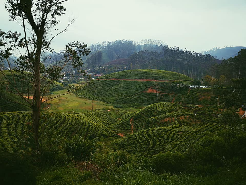 invite-to-paradise-sri-lanka-holiday-honeymoon-specialists-customer-feedback-elin-jordan-luce-tea-plantations.jpg