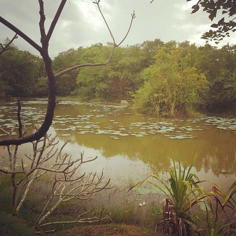 invite-to-paradise-sri-lanka-honeymoon-specialists-customer-guest-feedback-Paul-Traies-Chloe-Rowley-jetwing-vil-uyana-water.jpg
