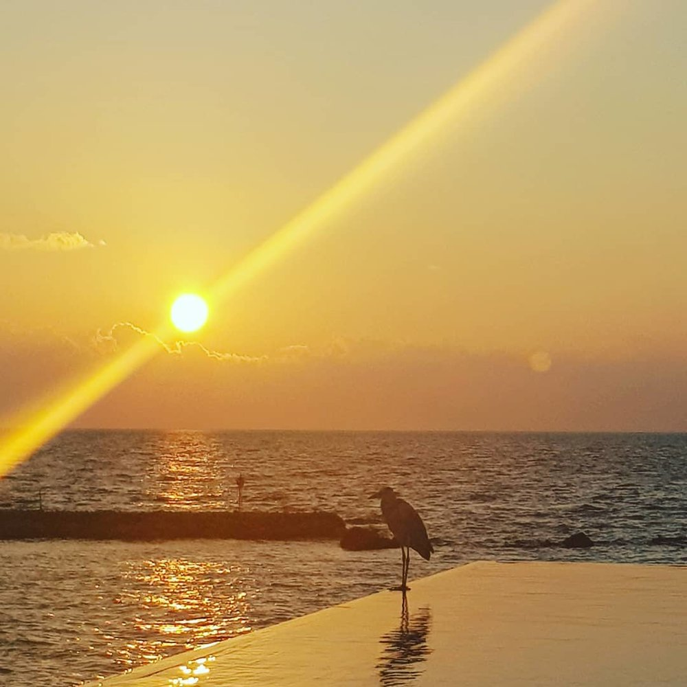 invite-to-paradise-maldives-coco-bodu-hithi-honeymoon-specialists-customer-guest-feedback-Paul-Traies-Chloe-Rowley-sunset-pool.jpg