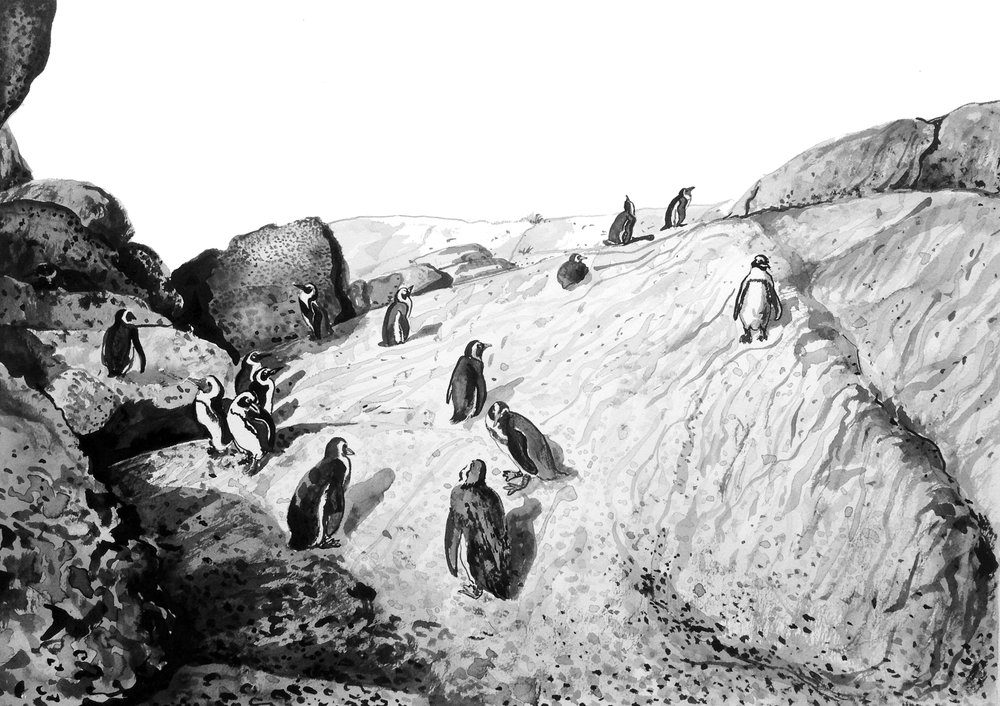 # 36 Boulders Penguin Colony