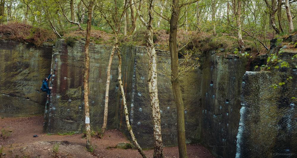 harmer's wood, yorkshire