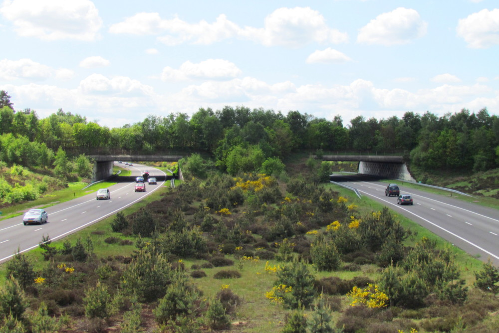 The 'Harm E. van de Veen Ecoduct'