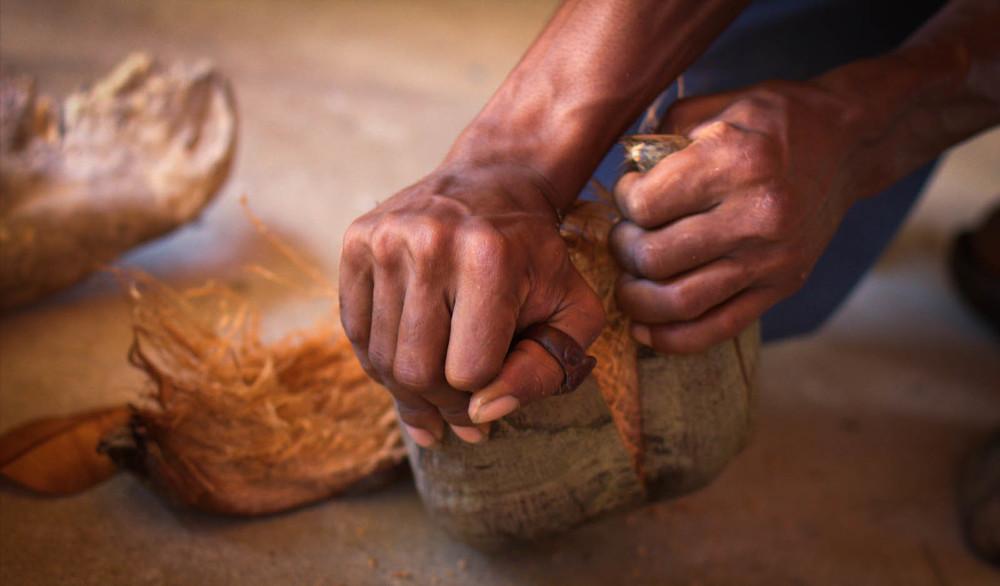 rasta mesa opening coconut