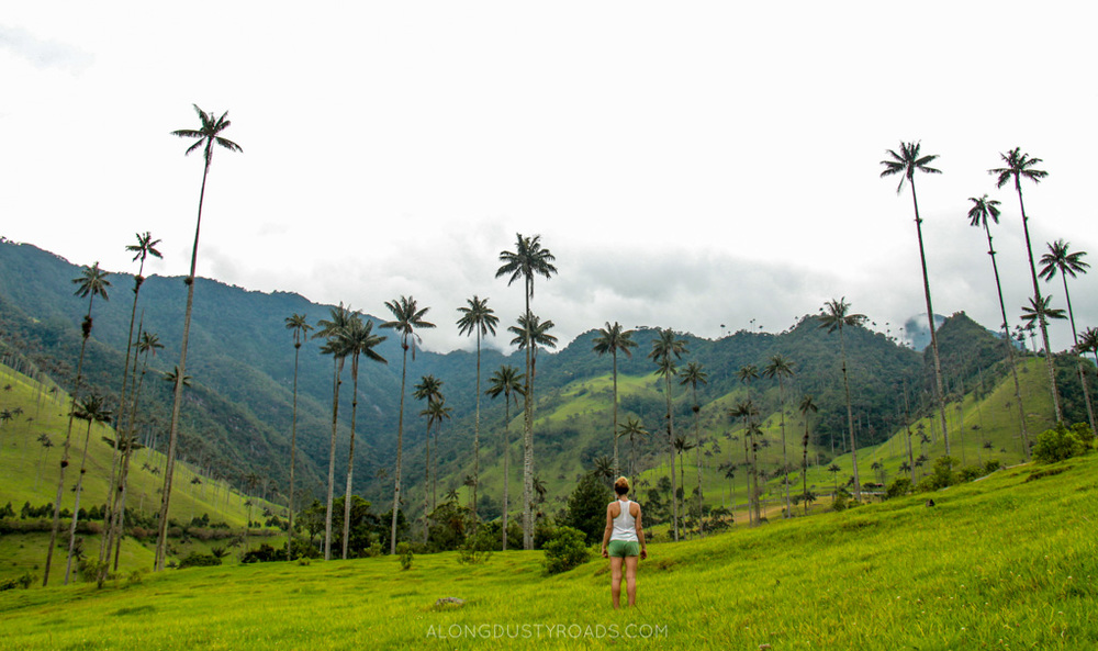 valle de cocora salento colombia