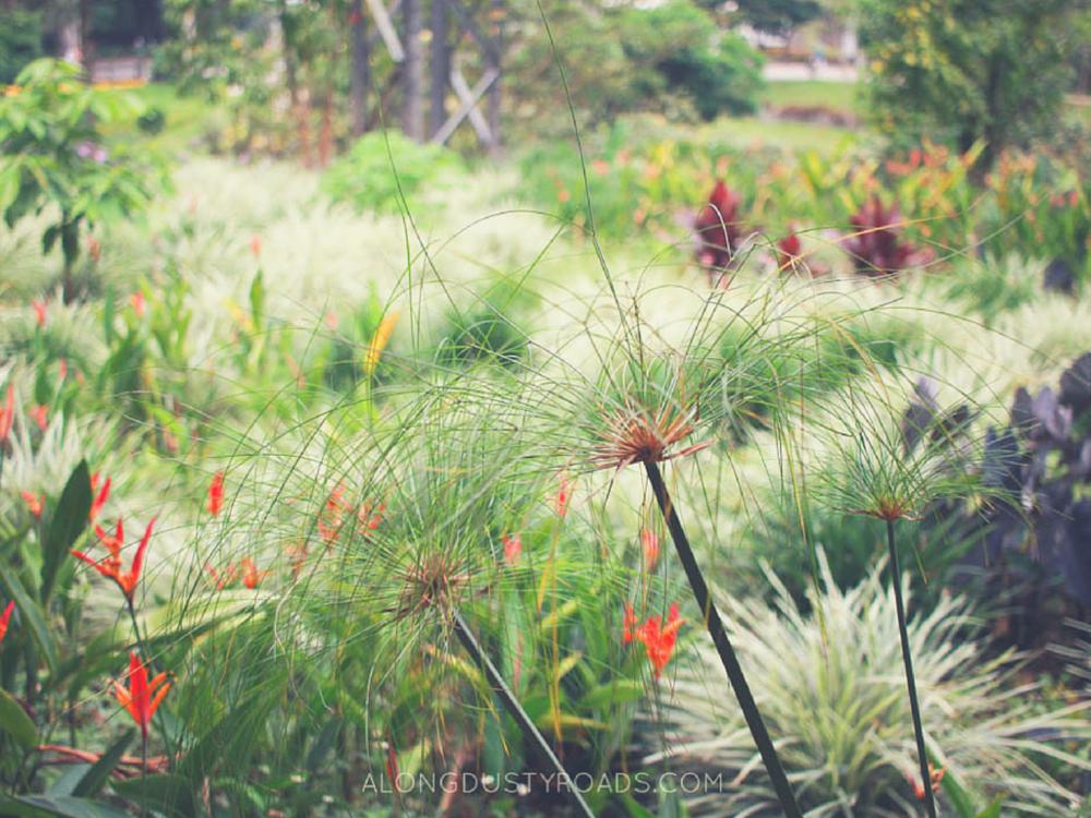 botanical gardens medellin colombia