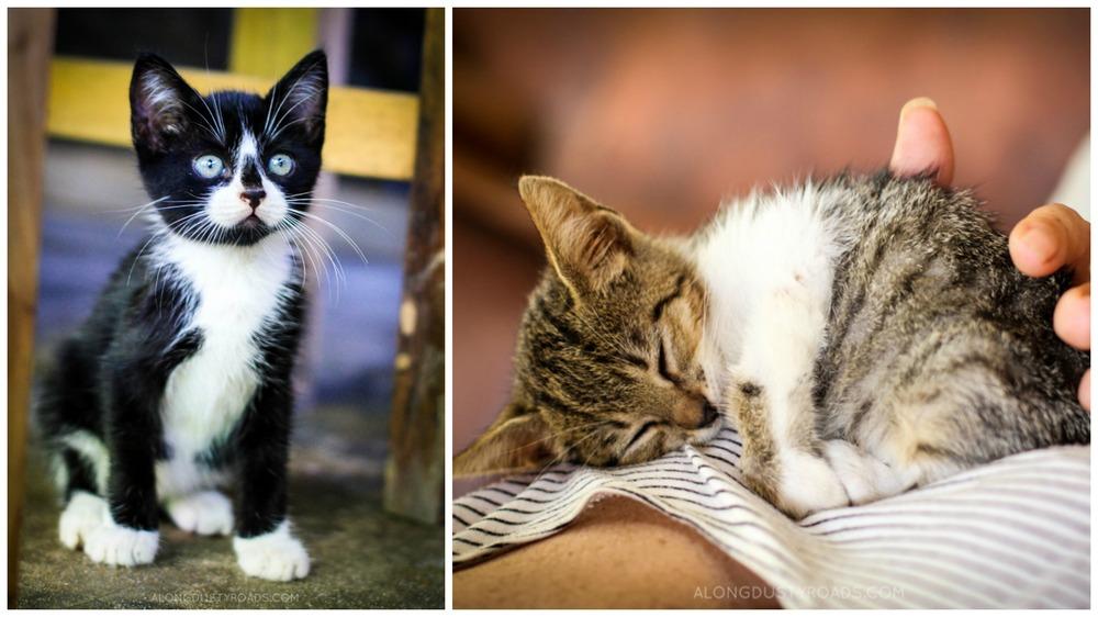 cute kittens montanita