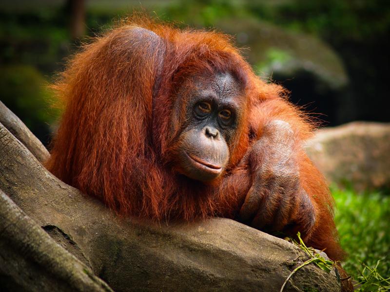 Such a beautiful creatures | Dupan Pandu