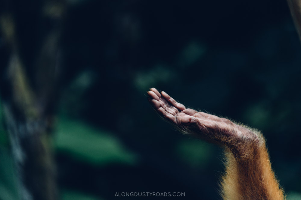 Hand of a monkey, Bolivia