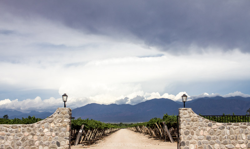Vineyards, Cafayate, Argentina
