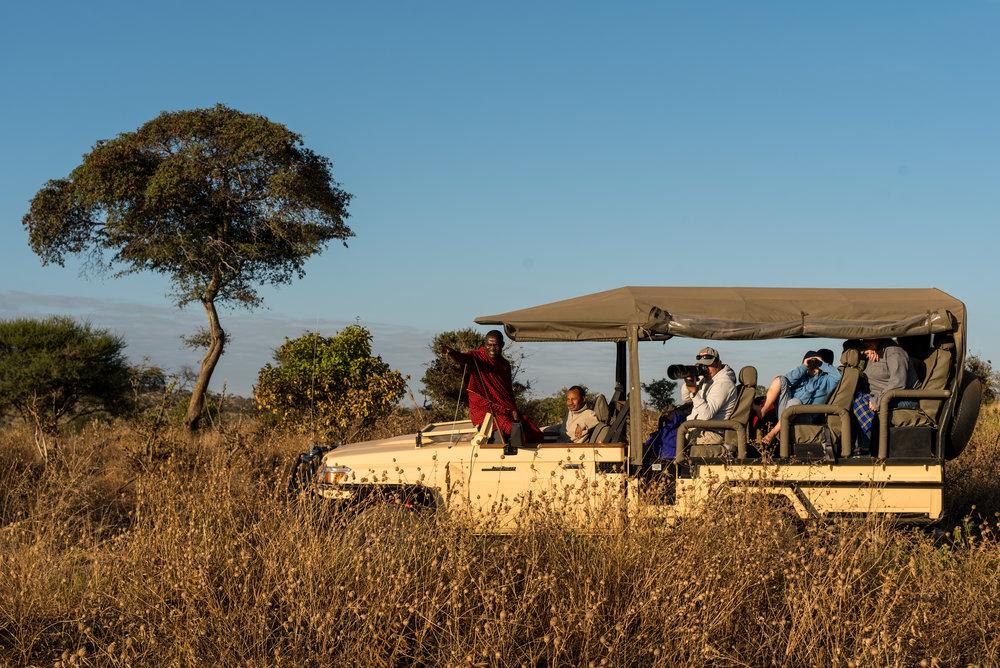 Yellow Zebra Safari Competition