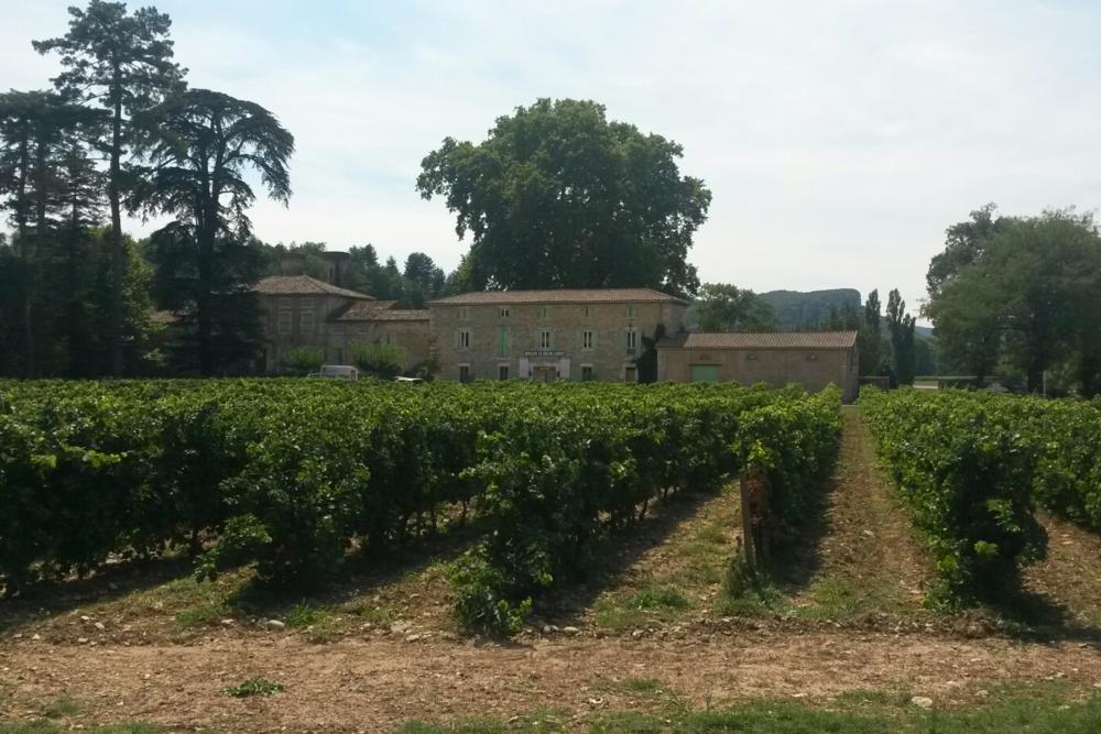 local ardeche Vineyard