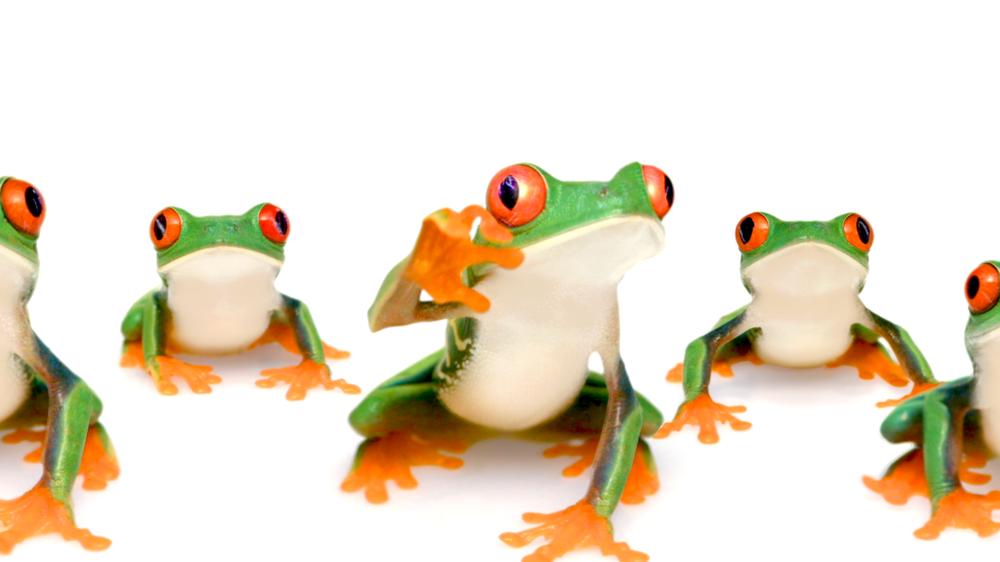 Telus Frog
