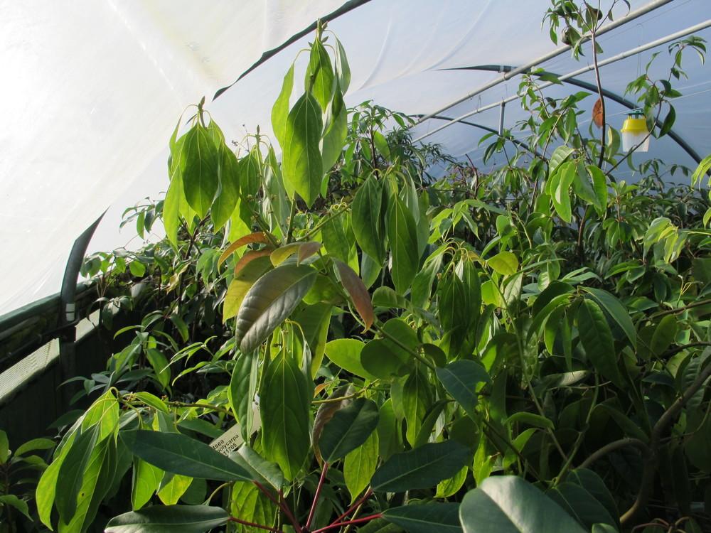 Crug Farm polytunnels