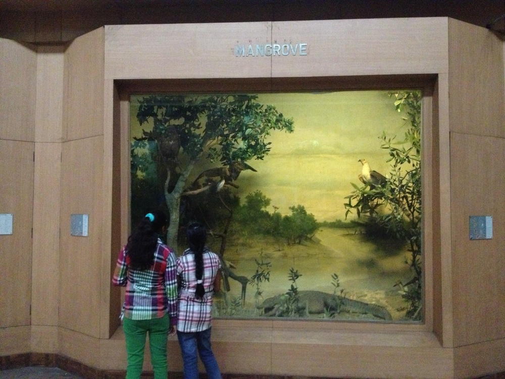 Diorama illustrating mangrove habitat at the Indian Museum, Calcutta