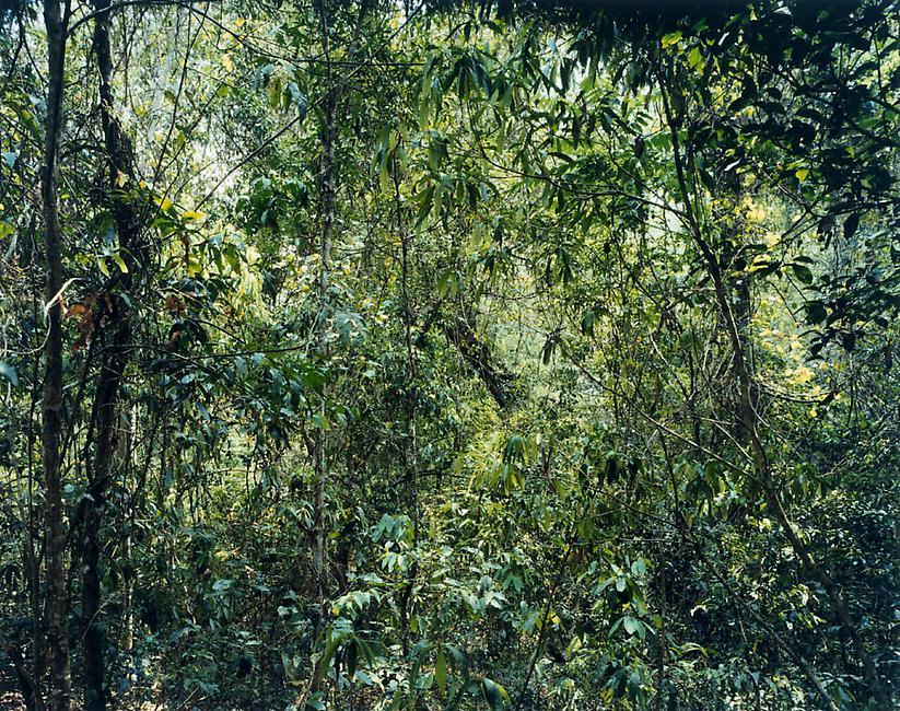 Thomas Struth, Paradise Series