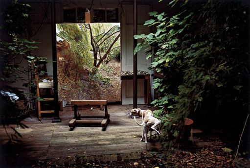 Lucien Freud's dog peeing on a pot plant in his London studio