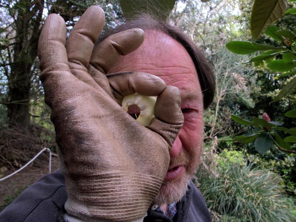 Bleddyn Wynn-Jones and Rhododendron macabianum