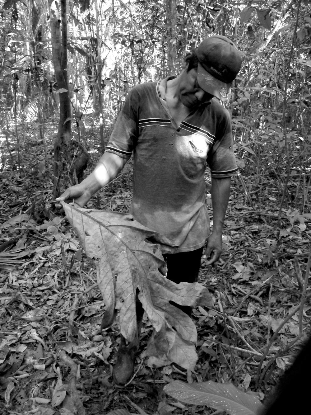 The Amazon Jungle, Peru