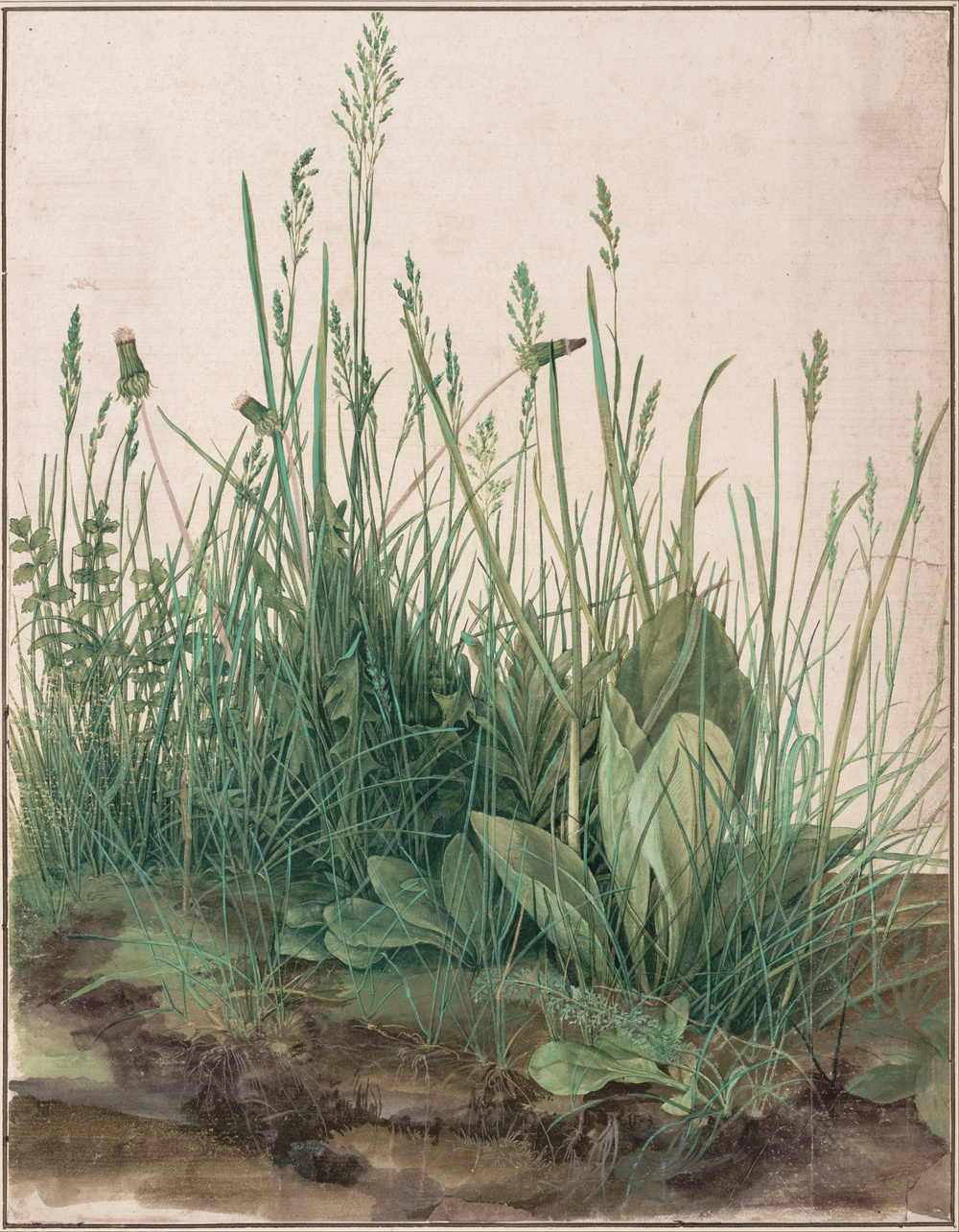 Albrecht Durer, Piece of Turf