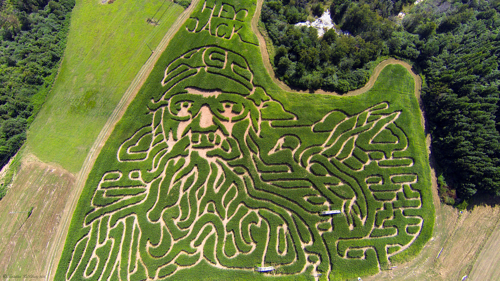 Corn Dawgs Corn Maze, Loganville, Georgia
