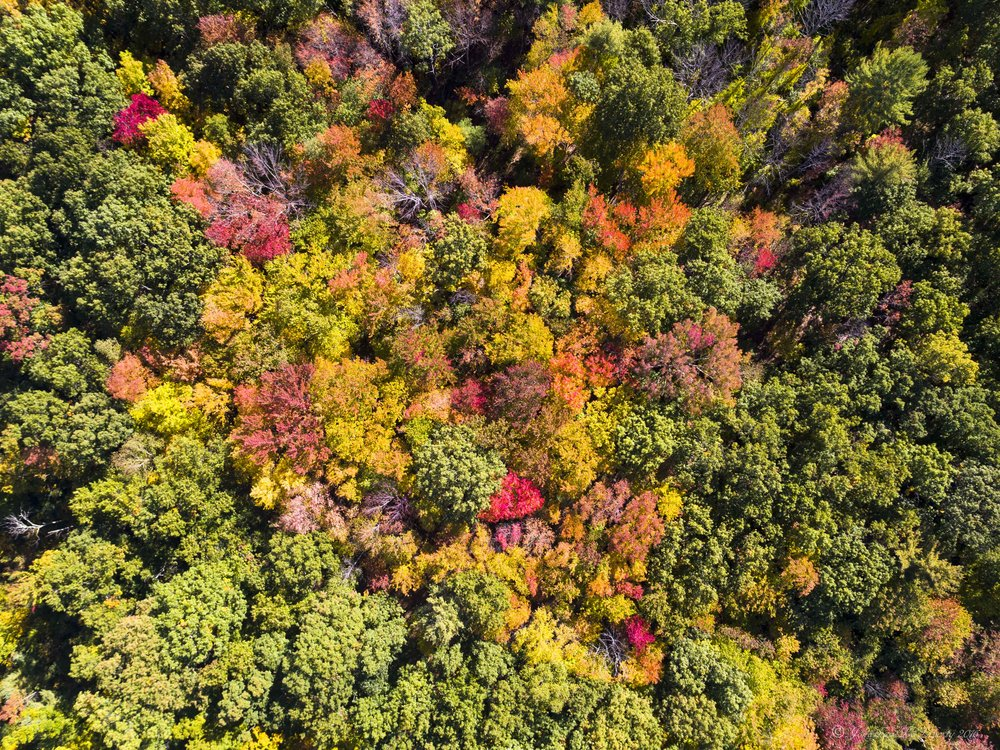 Fall Foliage New Hampshire Drone Photography