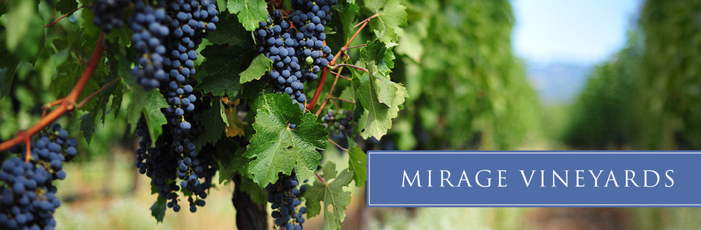 mirage-vineyard-03.jpg