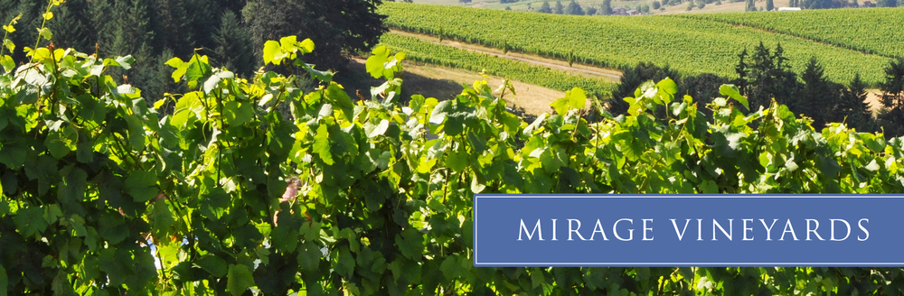 mirage-vineyard-01.jpg
