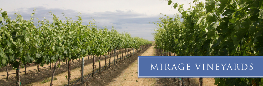mirage-vineyard-04.jpg