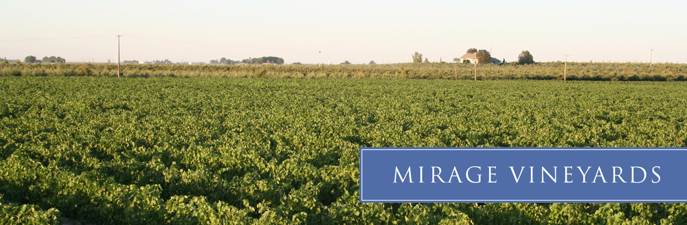 mirage-vineyard-06.jpg