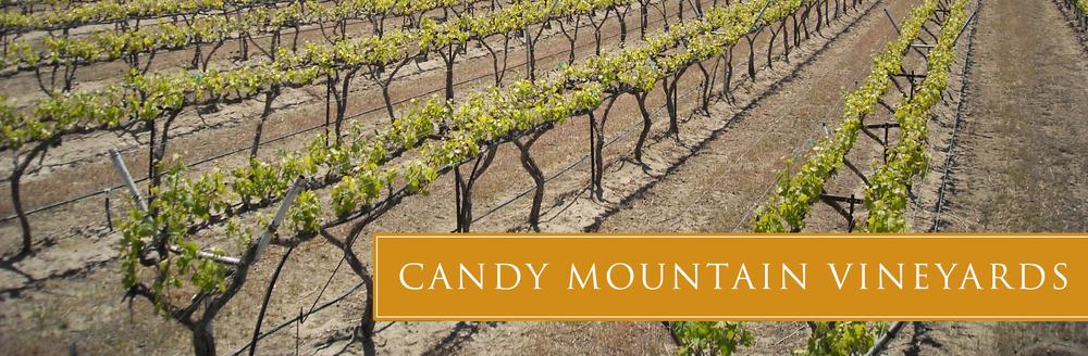 candy-vineyard-04.jpg