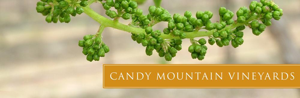 candy-vineyard-05.jpg
