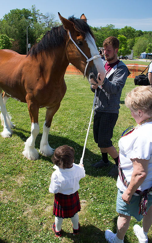 higames-1506-clydesdale-boy-1.jpg