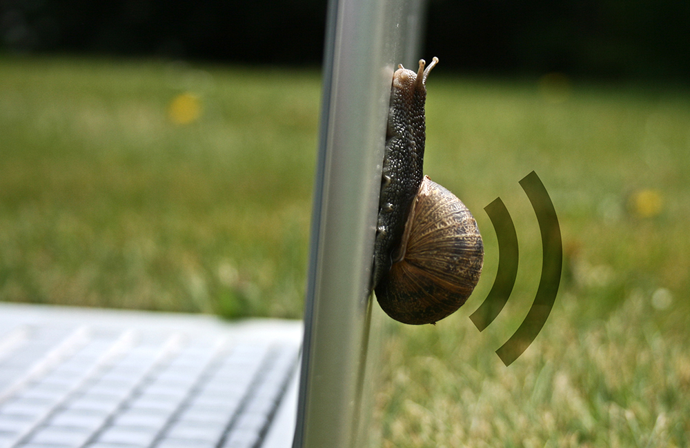 What if we could have devices to remember to forget?  Here a memory snail removes your unwanted data.