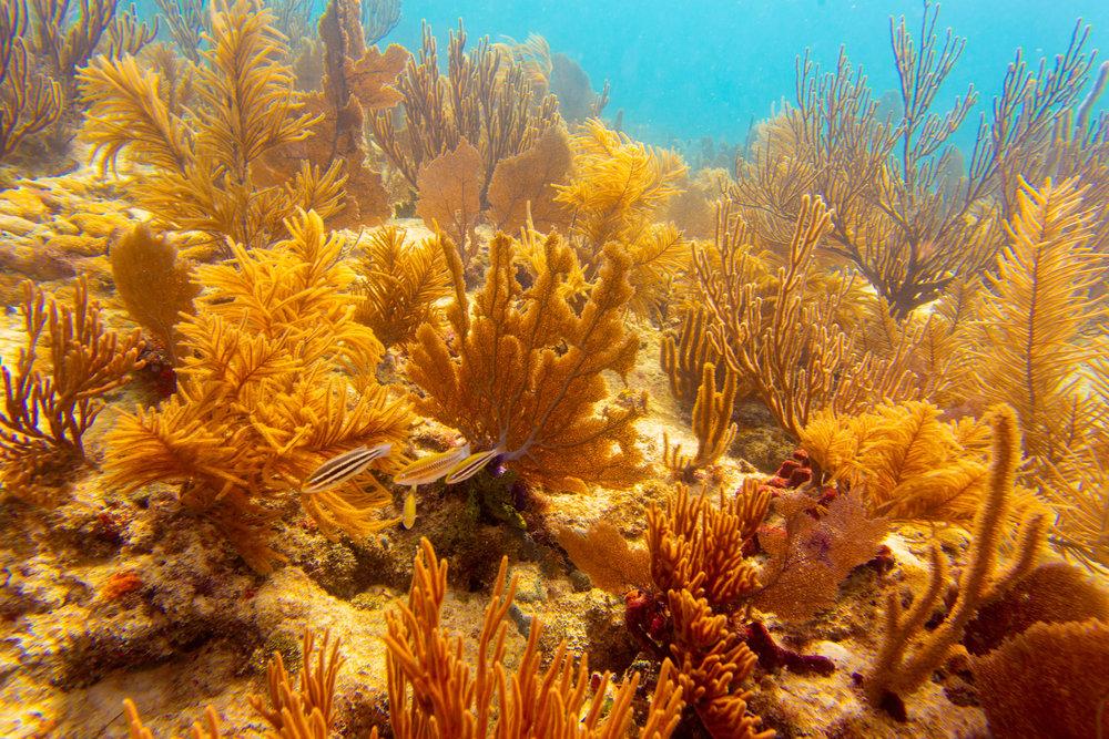 Anglers-Hotel-Reef-ve_steve-boxall-20180614_0073.jpg